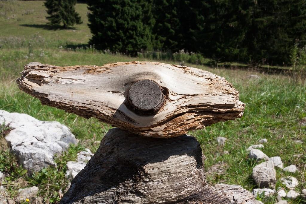 Natur erleben - Landal Parks Hochwald - Trierer Land Hunsrück