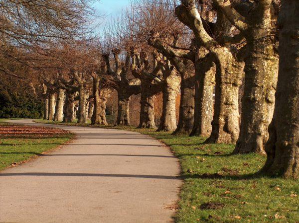 Urlaub machen im Saarland - Center Parcs Bostalsee