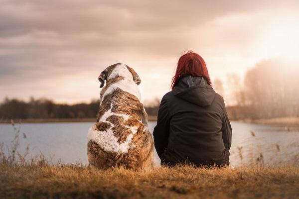 Ferienpark mit Hund entspannt genießen